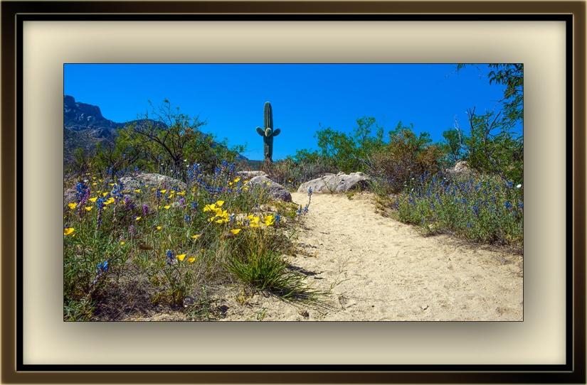 Wildflowers (1 of 1)-7 blog